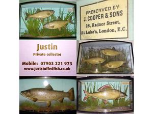 Taxidermy Cased Fish By J Cooper & Sons London in Slough