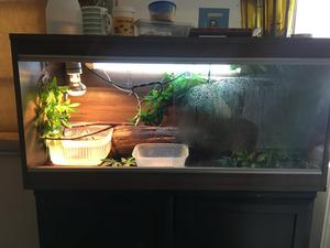 Baby Chinese Water Dragon and Full set up BRAND NEW