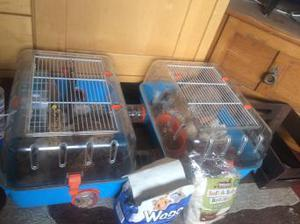 Beautiful hamster with cage and food and accessories