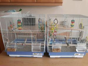 Two budgies and accessories