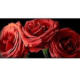 BRAND NEW BOXED ARTHOUSE 3 RED ROSES PRINTS 100CM X 50CM