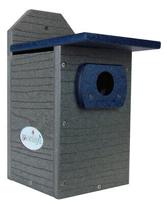 JCs Wildlife Recycled Poly Lumber Standard Bluebird Bird