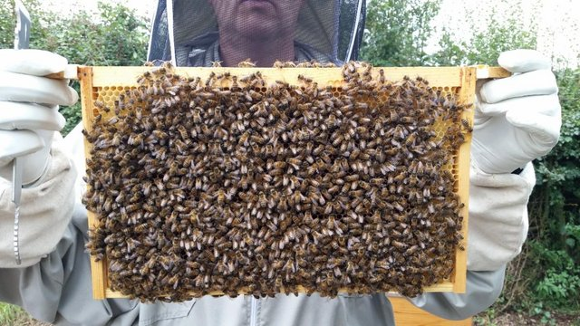 Nucleus of Bees for sale