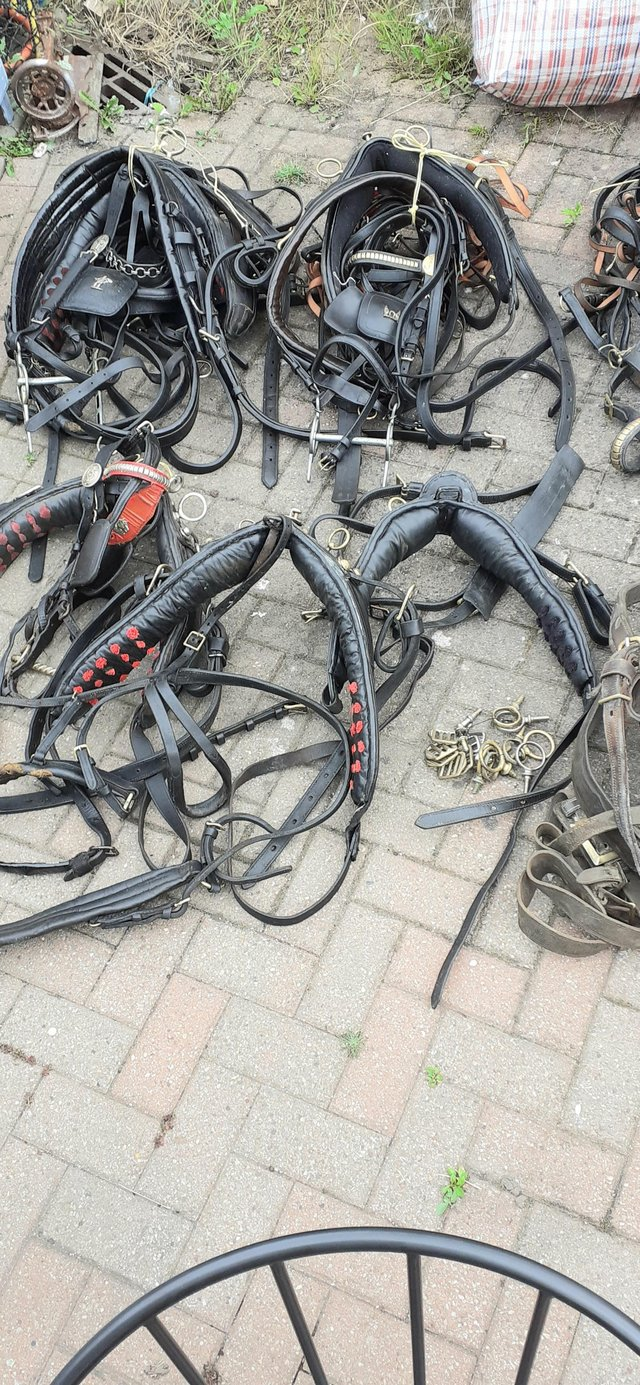 Job lot of used driving harness